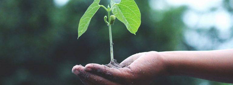 lead nurturing maxicus blog, Maxicus